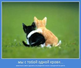 животные умеют дружить,не разделяя своих сородичей на цвета