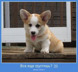 заведи собаку ))