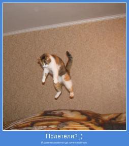 И даже кошкам иногда хочется летать