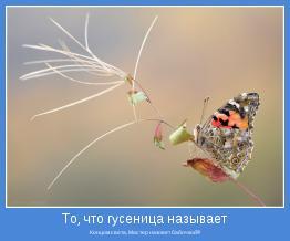 Концом света, Мастер назовет бабочкой!!!