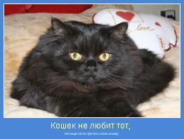 кто еще не встретил свою кошку.