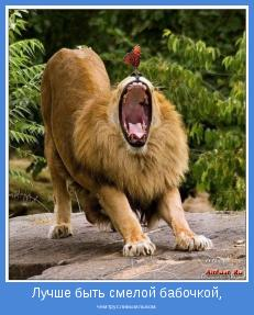 чем трусливым львом.