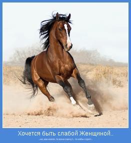 ...но, как назло, то кони скачут... то избы горят...