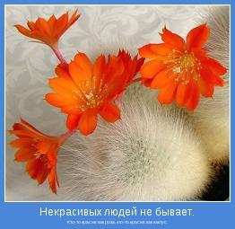 Кто-то красив как роза, кто-то красив как кактус.