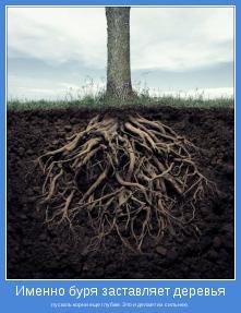 пускать корни еще глубже. Это и делает их сильнее.