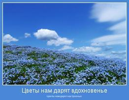 Цветы нам дарят настроенье