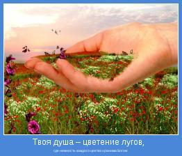 где нежность каждого цветка хранима Богом