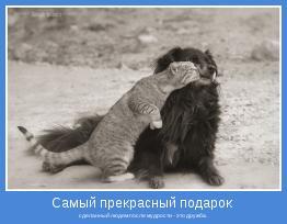 сделанный людям после мудрости - это дружба.