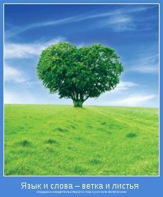 сердца и свидетельствуют о том, сухо или зелено оно
