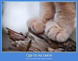 Где-то на свете живут милые лапки :)
