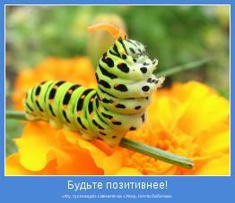 «Фу, гусеница!» смените на «Увау, почти бабочка»