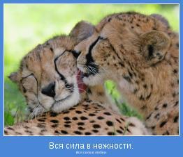 Вся сила в любви.