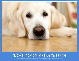 """человеком, каким считает меня моя собака"""". (Я. Вишневский)"""