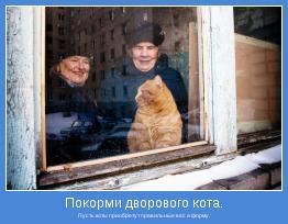 Пусть коты приобретут правильные вес и форму.