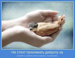 за слабость,  грубость за силу, а подлость - за умение жить.