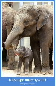 Мамы разные важны!
