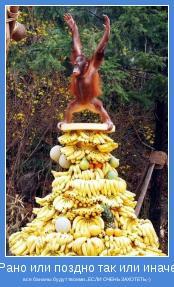 все бананы будут твоими...ЕСЛИ ОЧЕНЬ ЗАХОТЕТЬ;-)