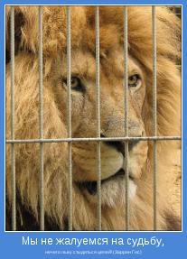 нечего льву стыдиться цепей! (Заррин Гис)
