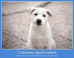 не изменит мир, но мир точно изменится для этой одной собаки