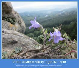 прекрасны, расцветая в суровых условиях, оставаясь собой...