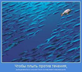 рыба должна быть сильной. Плыть по нему может и мертвая рыба
