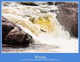 Плыть против течения может ТОЛЬКО ЖИВАЯ рыба