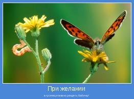 в гусенице можно увидеть бабочку!