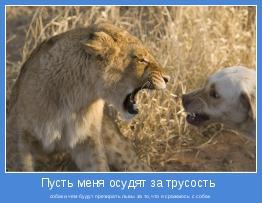 собаки,чем будут презирать львы за то,что я сражаюсь с собак