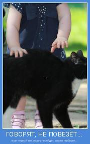если черный кот дорогу перейдет, а пока наоборот!..