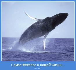 Это - кит.