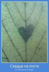 И у листьев есть сердце