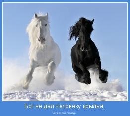 Бог создал лошадь