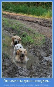 по уши в грязи не унывают, а начинают задорно булькать...
