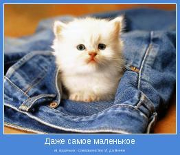 из кошачьих - совершенство /Л. да Винчи