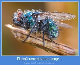 природа способна сделать прекрасными!