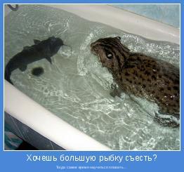 Тогда самое время научиться плавать...