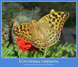 глянец на крыльях бабочки, не касайся их...