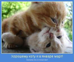 Хорошему коту и в январе март!