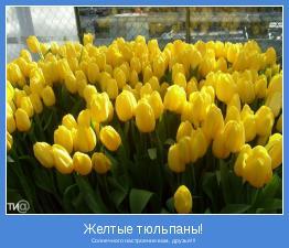 Солнечного настроения вам, друзья!!!