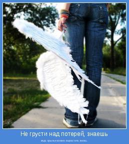 ведь крылья можно вырастить вновь.