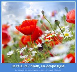 ры и, людям нежность отдавая, они цветут, сердца обогревая