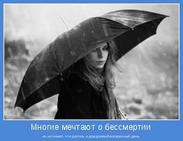 но не знают, что делать в дождливый воскресный день