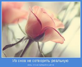 жизнь, это как гербарий из цветов