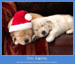 Дед Мороз присмотрит нам хорошего хозяина в подарок...
