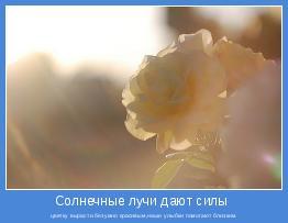 цветку вырасти безумно красивым,наши улыбки помогают близким