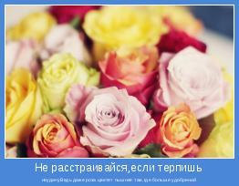 неудачуВедь даже роза цветет пышнее там,где больше удобрений