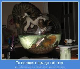 причинам слова «можно» и «нельзя» звучат для кошек одинаково