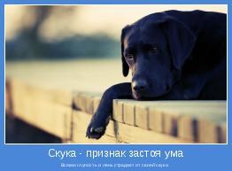 Всякая глупость и лень страдает от своей скуки.