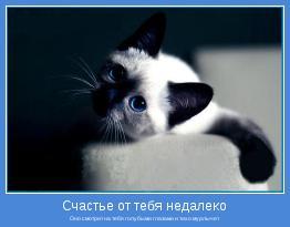 Оно смотрит на тебя голубыми глазами и тихо мурлычет
