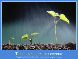 Поддерживай их своей верой, и в свое время увидишь плоды